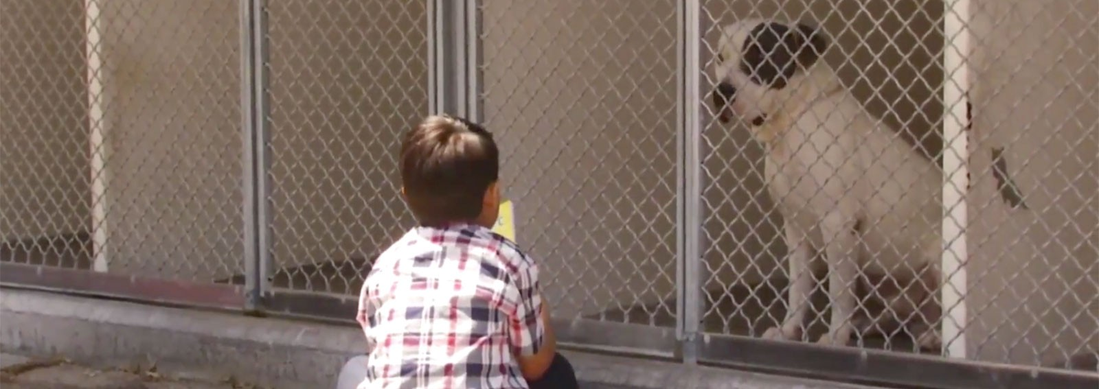 Little boy has weekly meeting with shelter pups for most heartwarming reason