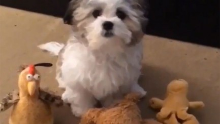 Adorable pup only loves 1 thing more than his 'best friend'