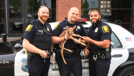 Police officers go above and beyond for orphaned fawn