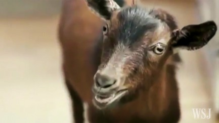 Top 5 Super Bowl ads starring animals
