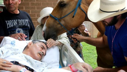 Beloved horses give terminally ill veteran the most touching final farewell
