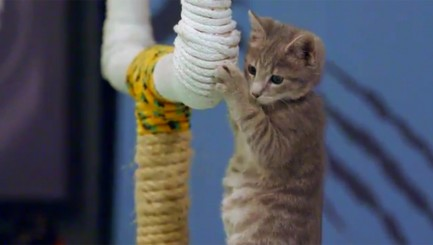Little furry 'athlete' has a tough time on the field in sneak peek of 'Kitten Bowl III'