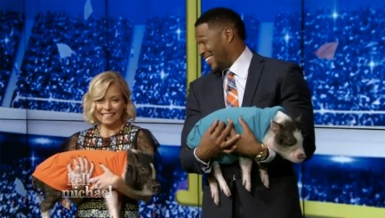 Kelly Ripa just can't stop laughing holding little piglet
