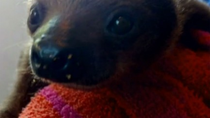 Lucky sloth travels the world in a private jet
