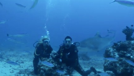 Massive sea creature makes dramatic appearance feet away from divers