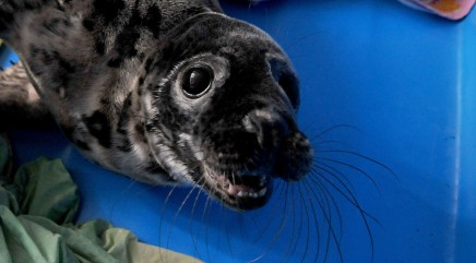 Saving seals in St. Petersburg