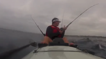 Shark knocks kayak fisherman off his ski