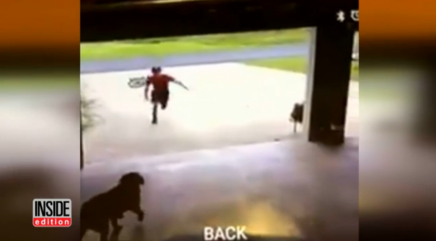 Boy caught on video sneaking into garage to hug dog
