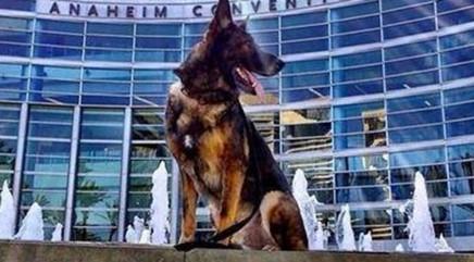Major update for police dog injured at work