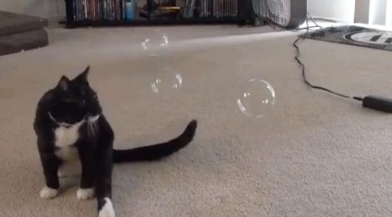 Floating bubbles fascinate cat