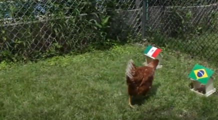 Can a chicken predict World Cup winners?