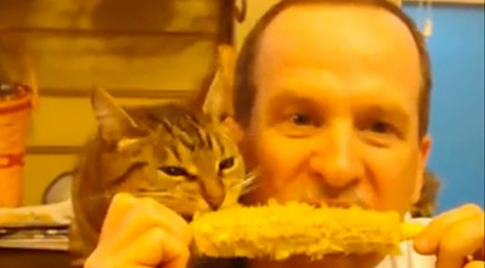 Cat and owner eat corn on the cob