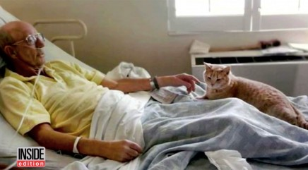 Kind cat who comforts elderly people has a 'sixth sense'