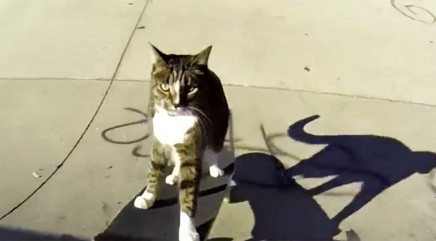 Fearless feline skateboarders will make your jaw drop