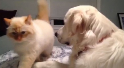 Pup's next move totally takes cat by surprise