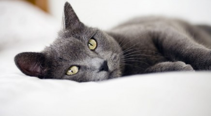 Study to decode what your cat's purrs really mean