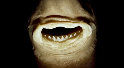 Why you don't want to encounter a 'cookiecutter' shark