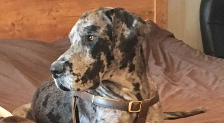 Firefighters step in to help Great Dane trapped in very unlikely spot