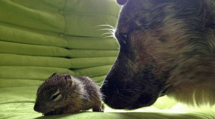 Squirrel meets dog in an explosion of cute