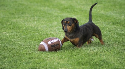 These pups may love football a little too much