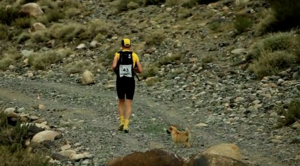Little stray dog who ran 77 miles with runner gets a sweet reward