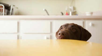 The 1 table scrap your vet wishes you'd stop feeding your pets