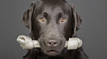 Dog deserves medal for patience