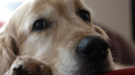 Is your pet home alone a lot? Check this out