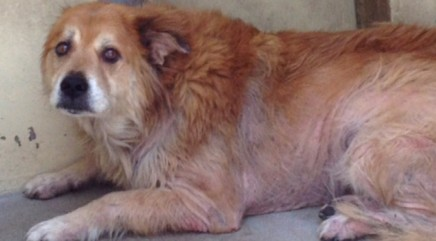 Depressed dog abandoned by owners is transformed by love