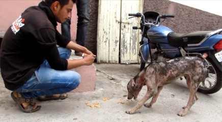 Stray dog struggling with painful skin condition is dramatically transformed after rescue