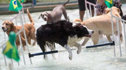 Adorable 4-legged athletes compete in the very first Olympic Dog Games