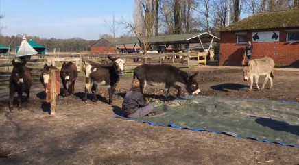 Donkeys make heartbreaking gestures for fallen friend