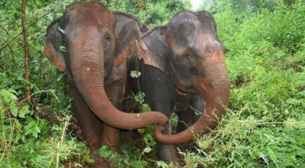 Rescued blind elephant mourns the death of her best friend