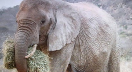 Elephant returns to sanctuary that saved her with a special surprise