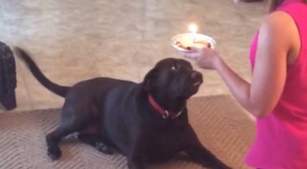 Birthday dog's next move goes horribly wrong