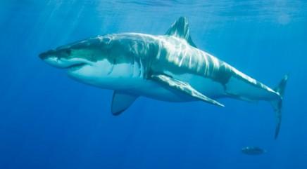 Mystery monster eating sharks
