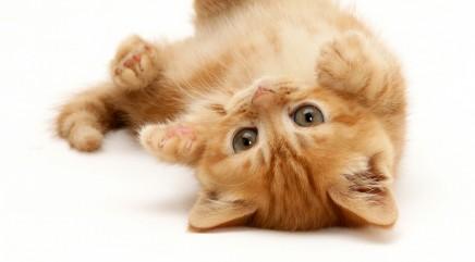 Kitten freaks out over little string