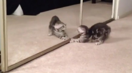 Adorable kitten is totally baffled by 'pal' in mirror