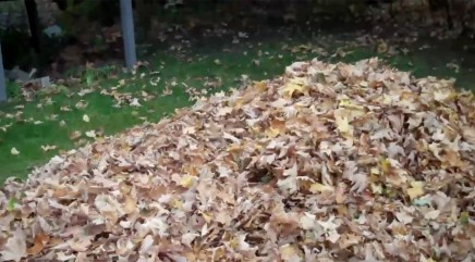 Playful creature pops out of giant pile of leaves