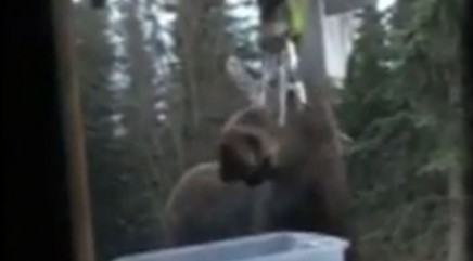 Moose plays one-part harmony with the wind chimes