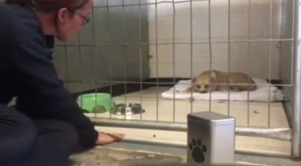 Depressed rescue pup refuses to move until she meets a very special friend