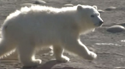 Adorable polar bear cub makes her public debut