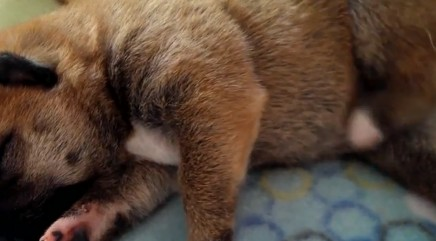 Precious puppy can't stop twitching