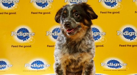 Get a sneak peek at the adorable competitors of Puppy Bowl XII