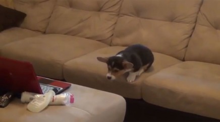 Tiny pup's next move will make you cringe