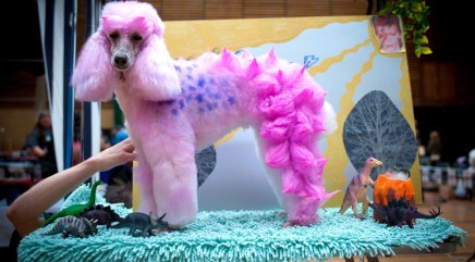 Most extreme pet grooming ... ever