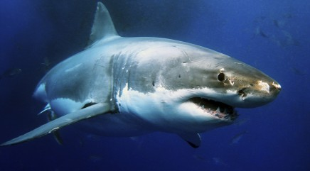 World's top shark attack hotspots