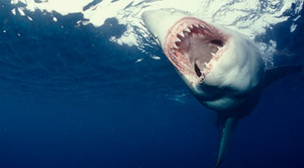 Inside the lair of the mega shark