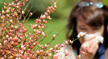 Just how bad will allergy season get?